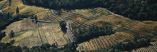 Autumn-Vineyard-Aerial-Panoramic.jpg