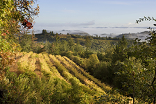 Backroad-Vineyard-Eden.jpg