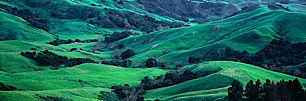 California-Green-Hideaway.jpg