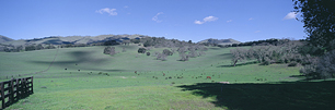 Carmel-Valley-Green-Pastures.jpg