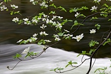 Dogwood-River-Tapestry.jpg