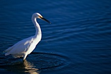 Egret-Fishing-Hole.jpg
