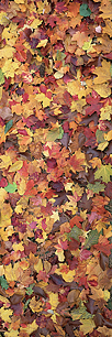 Fall-Leaf-Collage-Vertical.jpg