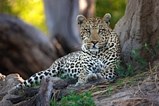 Land-of-the-Leopard.jpg