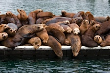 Lazy-Sea-Lion-Morning.jpg