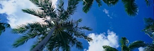 Palm-Tree-Canopy-and-Blue-Skies.jpg