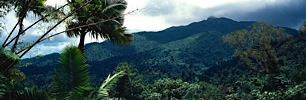 Puerto-Rican-Jungle-Overlook.jpg