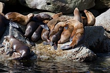 Sea-Lion-Lair.jpg