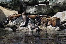 Sea-Lion-Lounge.jpg