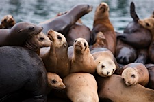 Sea-Lion-Party.jpg