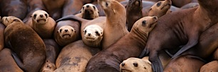 Sea-Lion-Pile-on.jpg