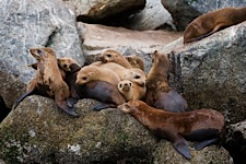 Sea-Lion-Pillows.jpg