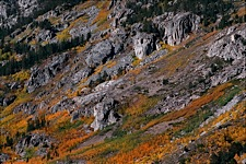 Sierra-Autumn-Color.jpg