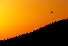 Sunset-Soaring.jpg