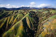 Wildflower-Coast-Aerial.jpg